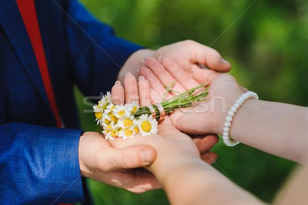 Százszorszép gyűrűk menyasszony vőlegény kéz a kézben kamilla Stock fotó © O_Lypa