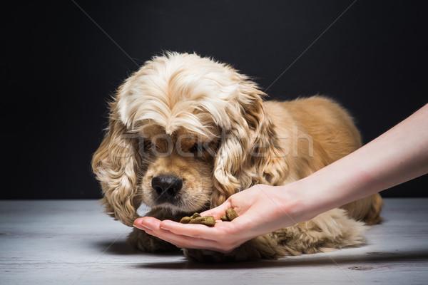 женщины стороны собака американский белый Сток-фото © O_Lypa