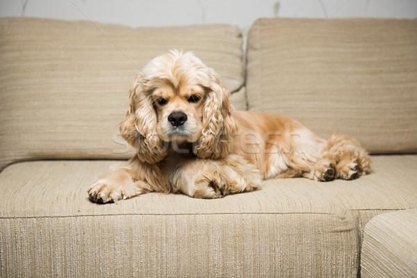 Fiatal amerikai bézs kanapé belső nappali Stock fotó © O_Lypa