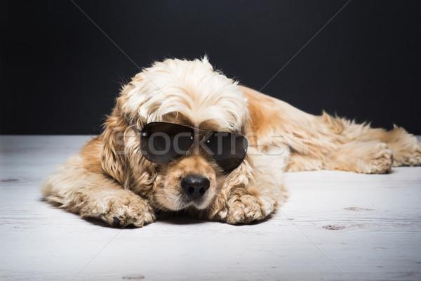 Amerikai napszemüveg kutya fehér fapadló fiatal Stock fotó © O_Lypa