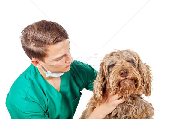 Veterinarian doctor Stock photo © Obencem