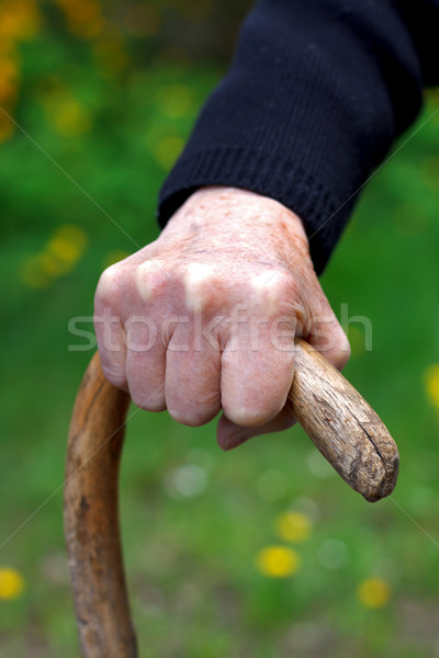 Wrinkled hands Stock photo © ocskaymark