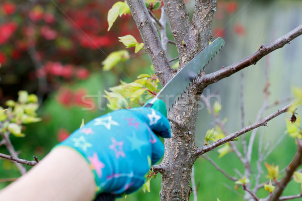 Pruning plants Stock photo © ocskaymark