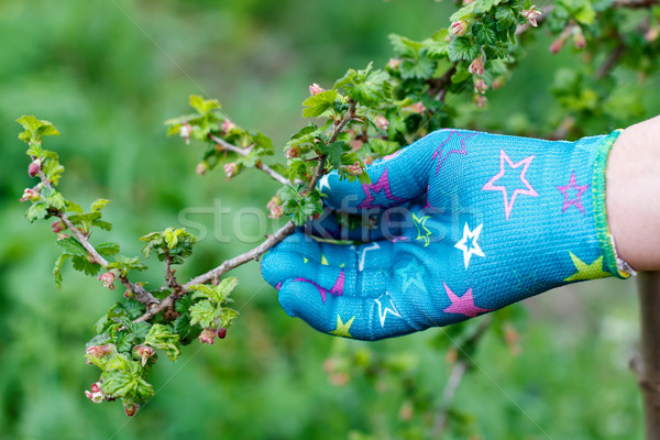 Ramo feminino mão luva flor Foto stock © ocskaymark