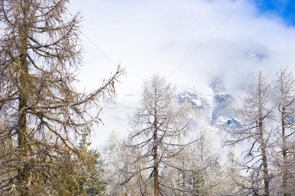 Gün alpler ağaç orman doğa Stok fotoğraf © ocusfocus