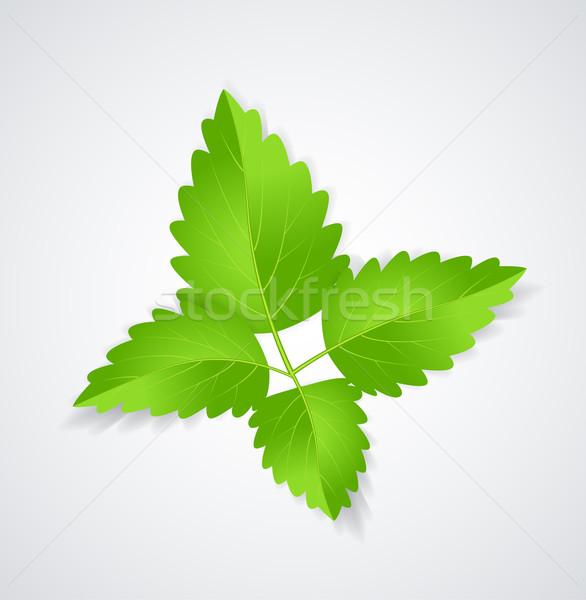 Mint Leaves Stock photo © odina222