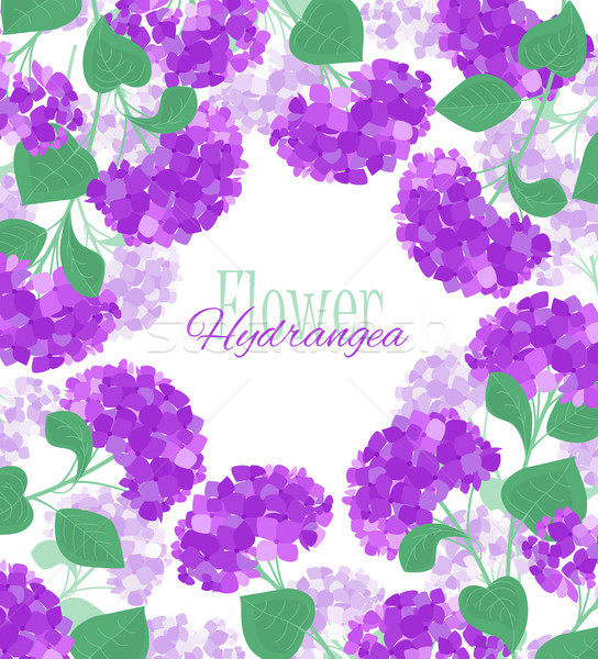 Vector hydrangea flower Stock photo © odina222