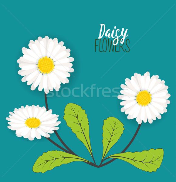 Pradera floral margaritas diseno hoja fondo Foto stock © odina222