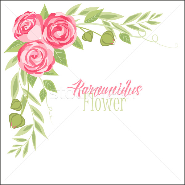 Stok fotoğraf: Vektör · çiçek · pembe · çiçekler · yaprak · bahçe