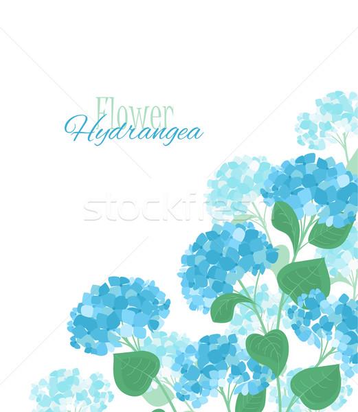 Stockfoto: Vector · bloem · Blauw · bloemen · textuur · verjaardag
