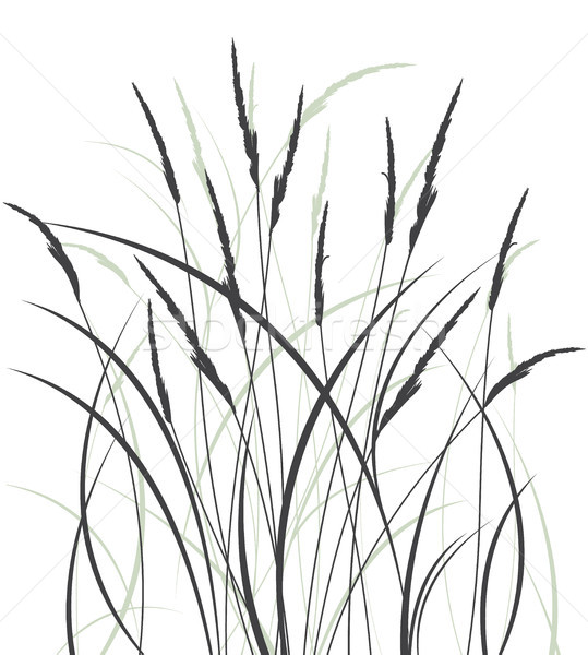 Grass in a meadow Stock photo © odina222