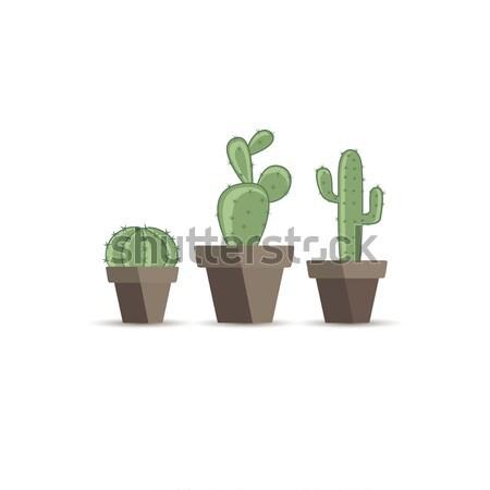 Kaktusz virágcserép szett fehér természet kert Stock fotó © odina222
