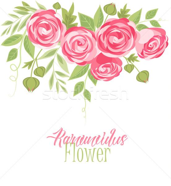 Vector ranunculus flower Stock photo © odina222