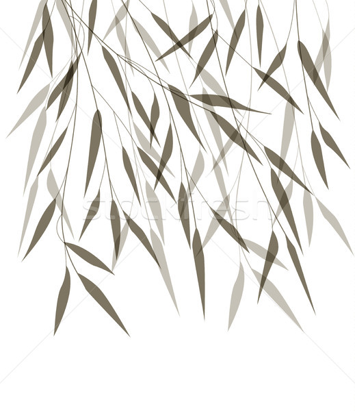 Vector bamboo leaves Stock photo © odina222