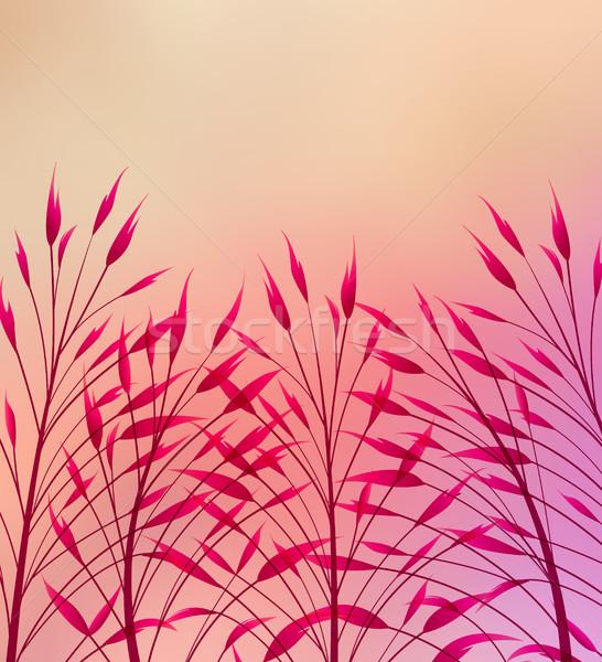 Vektor legelő fű színes absztrakt alkotóelem Stock fotó © odina222