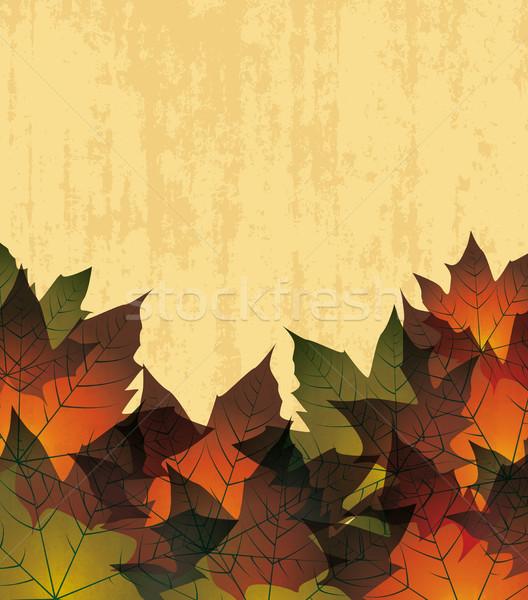 autumn leaves Stock photo © odina222