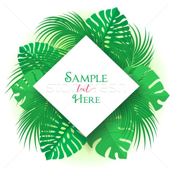 Feuille de palmier décoration exotique arbre plage printemps Photo stock © odina222