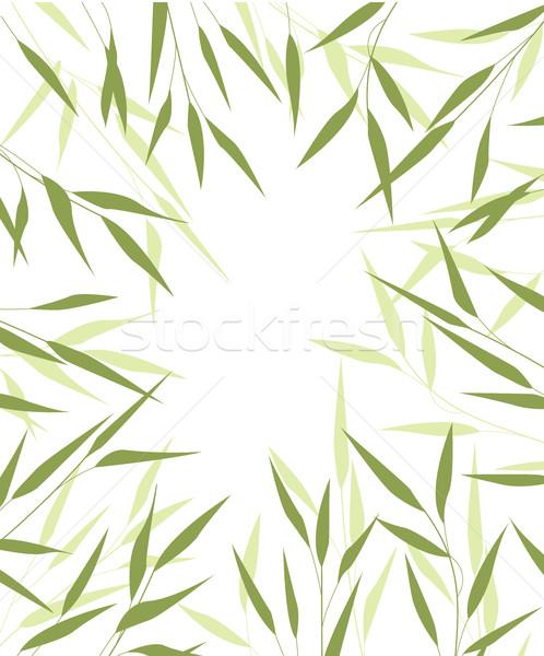 Bambu folhas verdes folhas árvore floresta natureza Foto stock © odina222