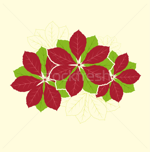 Poinsettia Flower Stock photo © odina222