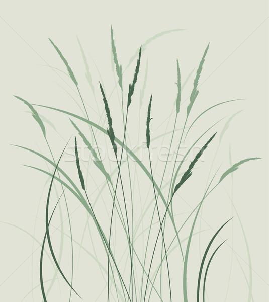 Gras weide natuurlijke landschap voorjaar abstract Stockfoto © odina222