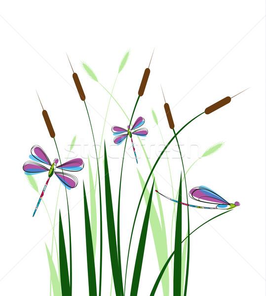 Libélula grama branco primavera projeto fundo Foto stock © odina222
