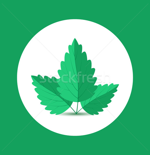 Vector Mint Leaves Stock photo © odina222