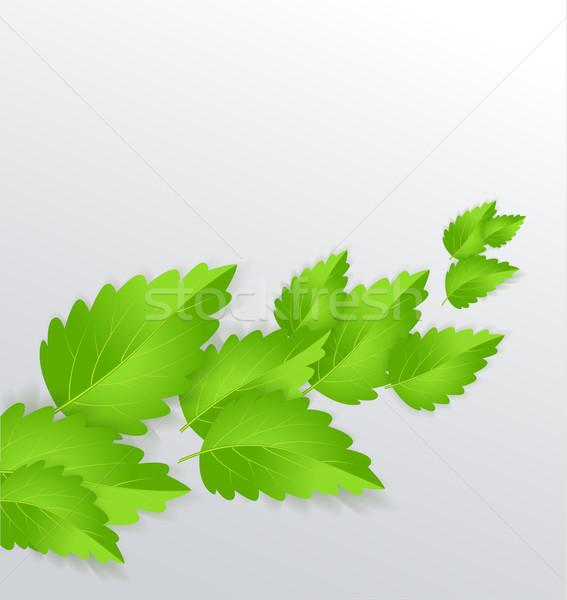De folhas verde natureza projeto cozinha Foto stock © odina222