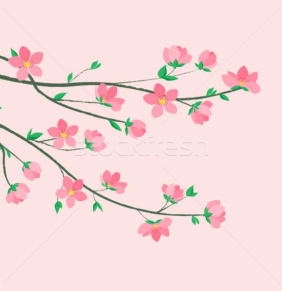 Spring sakura blossom Stock photo © odina222