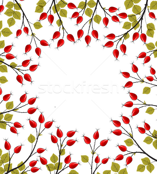 Vektor rózsa csípő ágak fehér virág Stock fotó © odina222