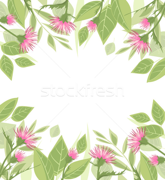 Thistle with green leaves Stock photo © odina222