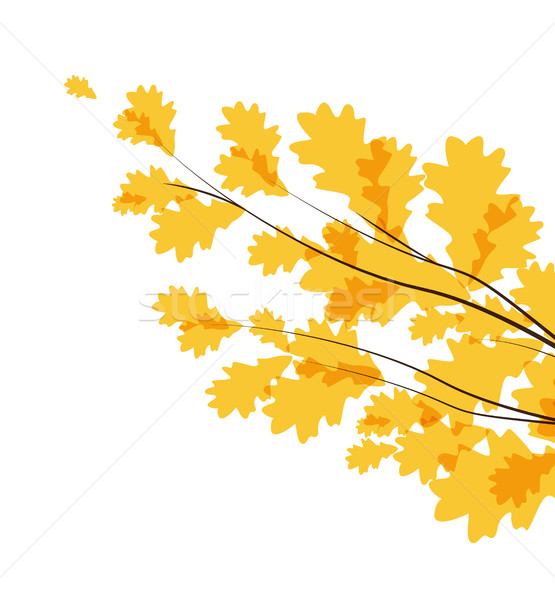 Vector autumn leaves Stock photo © odina222