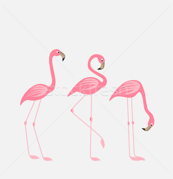 Tropical bird flamingos Stock photo © odina222