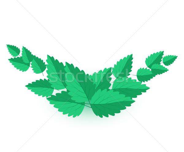 Vetor de folhas verde natureza projeto Foto stock © odina222