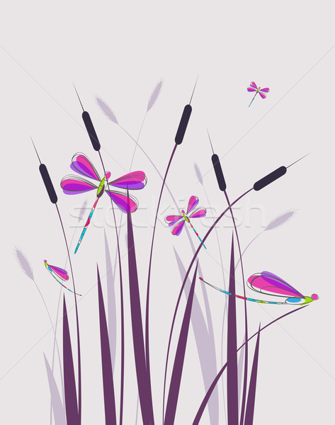 Vector illustration dragonfly Stock photo © odina222