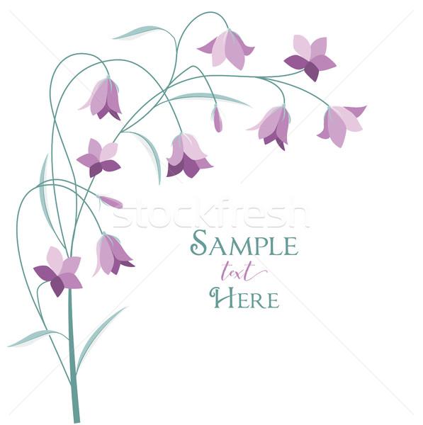 Summer flower campanula Stock photo © odina222