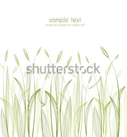 green grass Stock photo © odina222