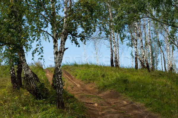 Stock photo: birch trees grow on top of the hill