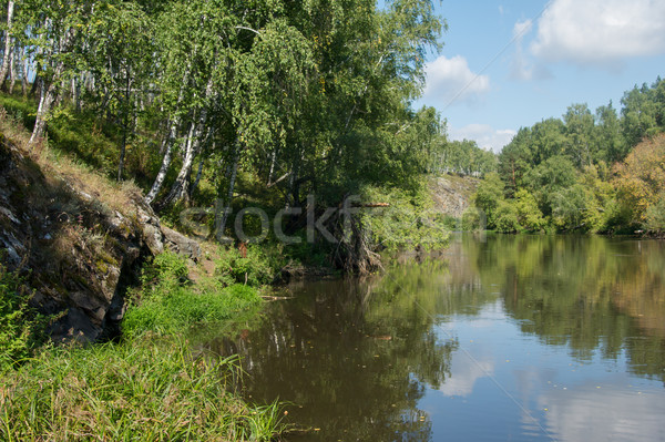 river overgrown with birch trees and shrubs Stock photo © oei1