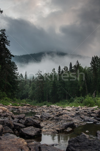 landscape wildlife. forest, mountain and river. Stock photo © oei1