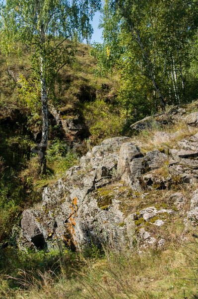 stone ledge on the wooded hills Stock photo © oei1