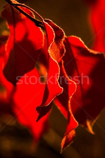 красочный растений покрытый мороз фоны Сток-фото © oei1