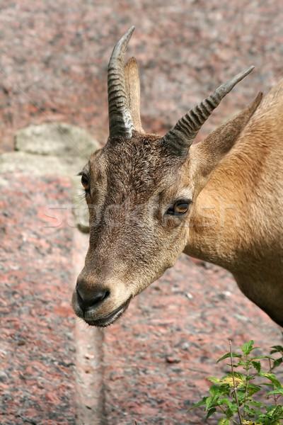 лице глазах портрет животные парка Сток-фото © offscreen