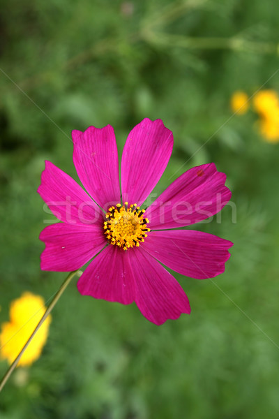 цветок широкий лепестков зеленый красоту подарок Сток-фото © offscreen