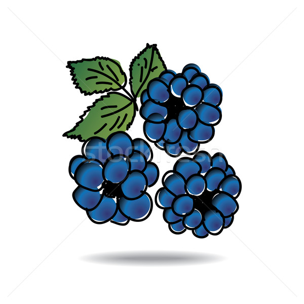 Freehand drawing dewberry icon Stock photo © ojal