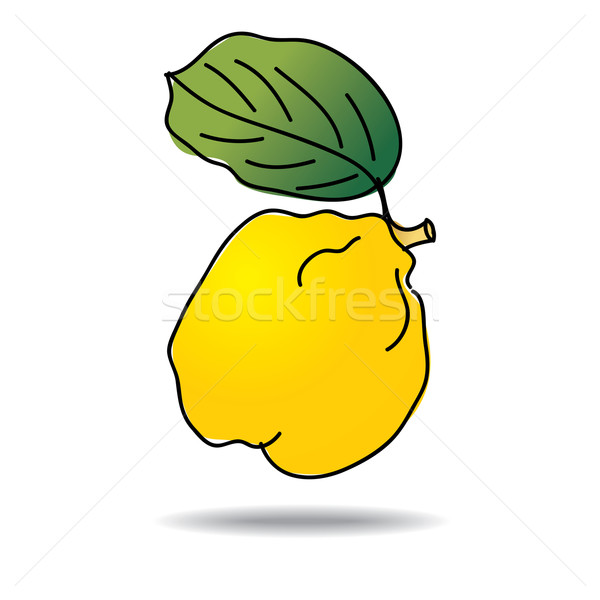 Freehand drawing quince icon Stock photo © ojal