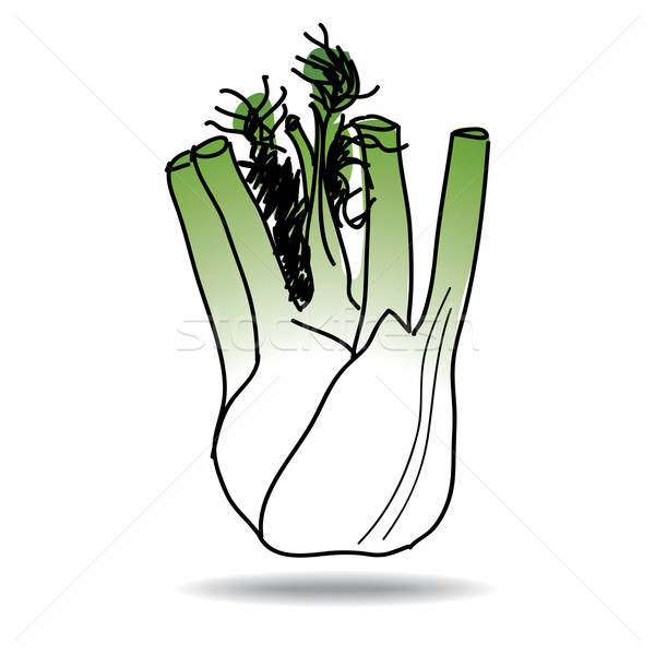 Freehand drawing fennel icon Stock photo © ojal
