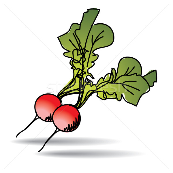 Freehand drawing radish icon Stock photo © ojal