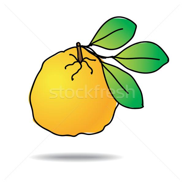 Freehand drawing ugli fruit icon Stock photo © ojal