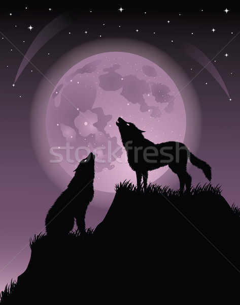 Two wolfs. Stock photo © oksanika