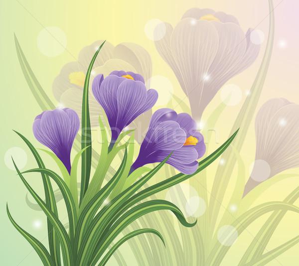 Tavasz kikerics virágok pasztell húsvét boldog Stock fotó © oksanika